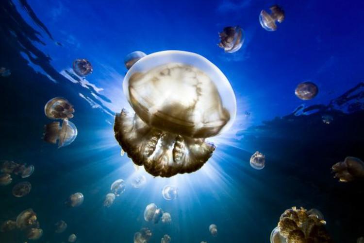 Надя Али. «Подводное солнце». Первое место в номинации «Портфолио». Фото: Nadia ALY