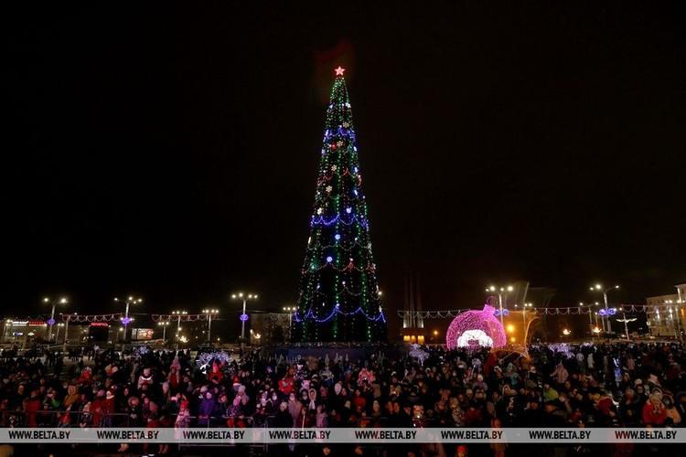 Витебск любит стройные елки. Фото: БелТА
