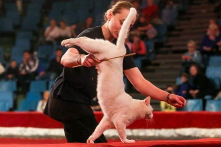 Кошки могут тренироваться по часу в день — больше не заставишь. Фото: Предоставлено Ольгой Воложаниной
