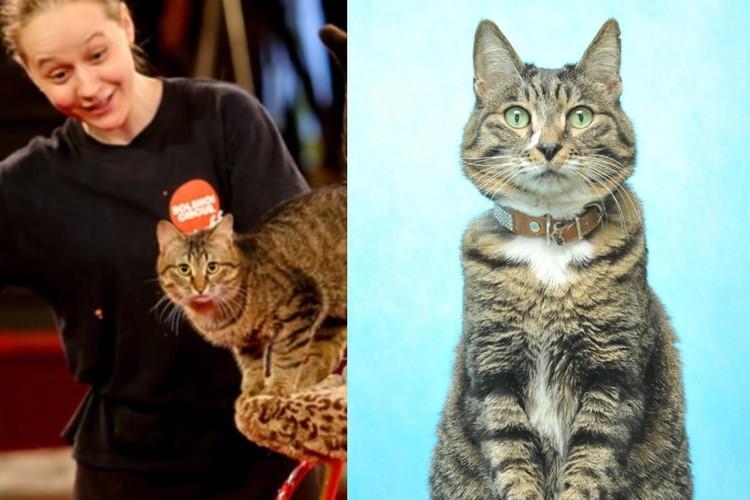 Уличный кот Мартин пришел в цирк с разбитой мордой, а теперь он любимец публики. Фото: Предоставлено Ольгой Воложаниной
