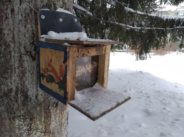 Белка сама открывает крышечку и достает корм. Фото: Мария Попова.