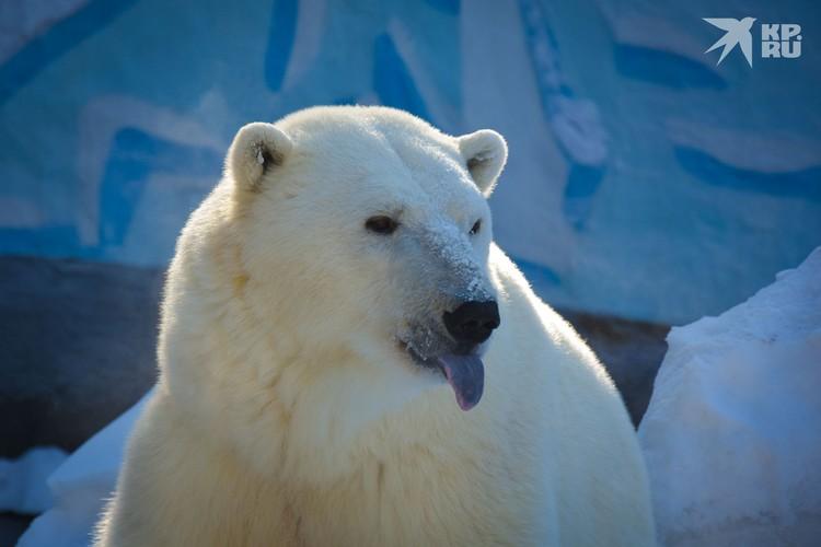 А вот Норди — вполне себе самодостаточный медведь, ему и так хорошо.