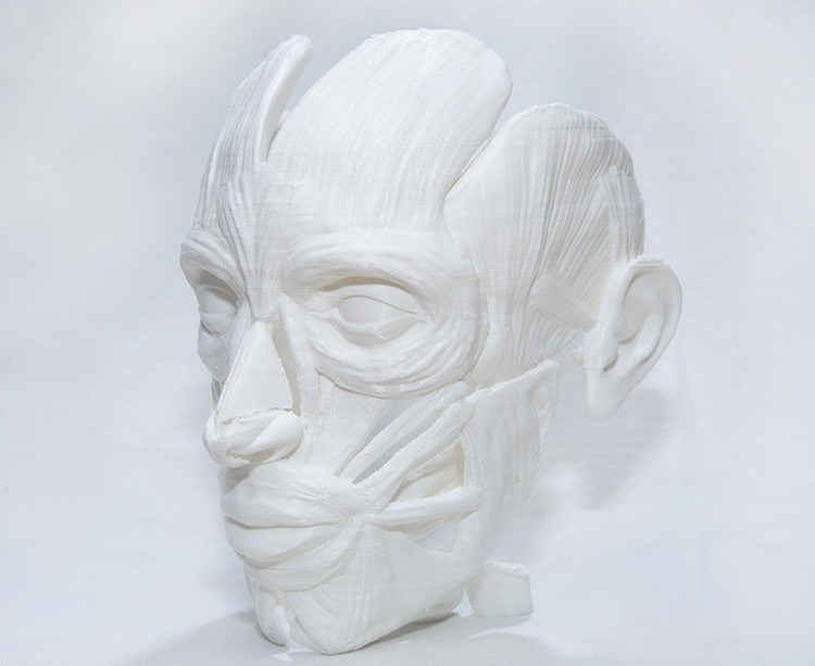 Пластиковые фигуры создаются для Медицинской академии КФУ. Фото: пресс-служба КФУ