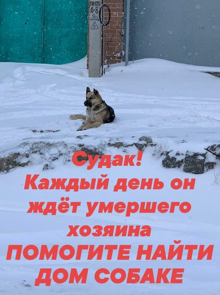 Псу нужен новый дом. Фото: Светлана Миколайчук/VK