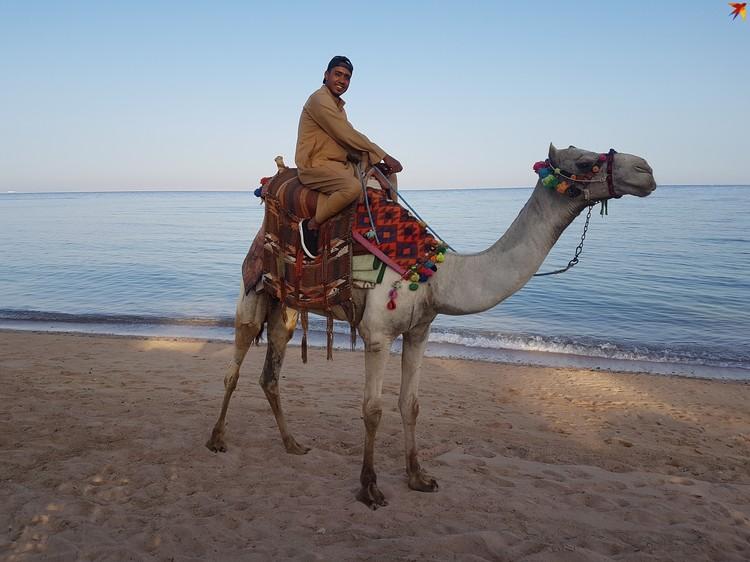 Египет остается любимым местом отдыха многих белорусов