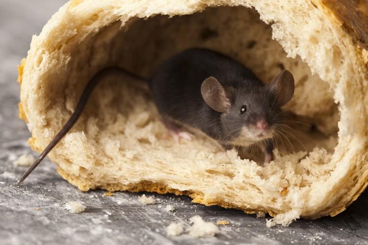 Умные мыши найдут, где устроиться.