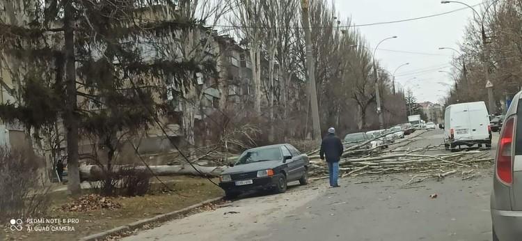 Сильный ветер повалил деревья в столице. Фото: t.me/ionceban