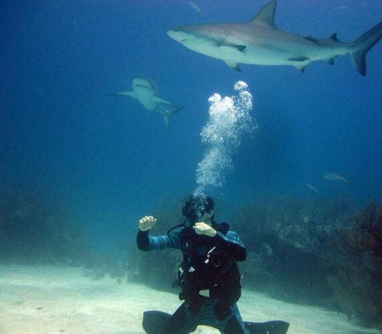 Акулы подплывают очень близко, можно протянуть руку и коснуться.