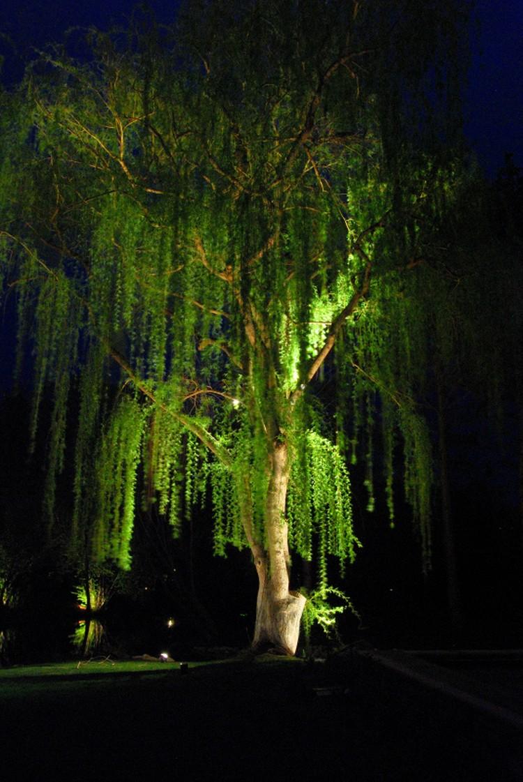 Подсветка деревьев может быть разной.