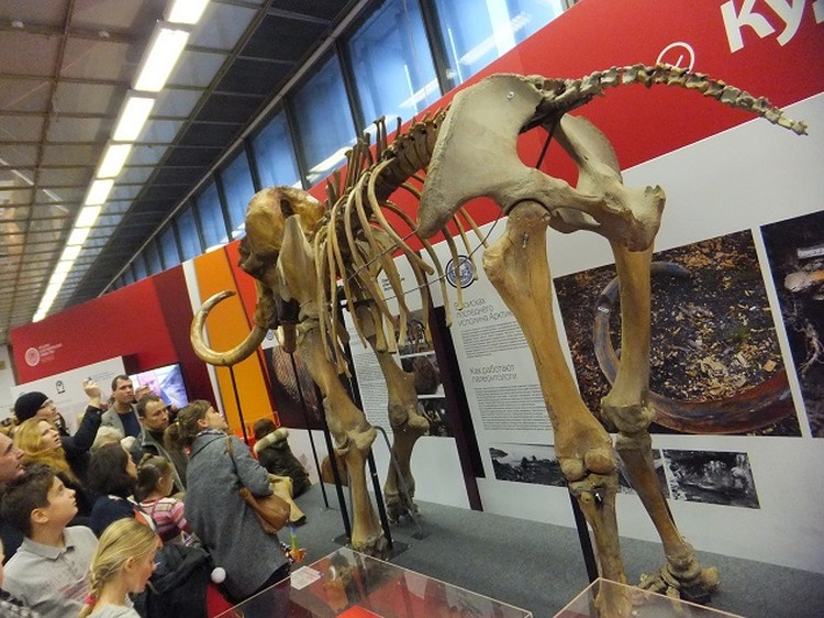 Фото доисторических скелетов и даже сэлфи с мамонтом - популярнейшее занятие у посетителей фестиваля.