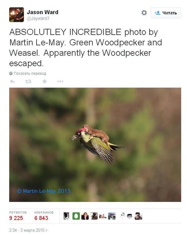 Эта фотография моментальна разошлась по соцсетям, а животные стали новым мемом.