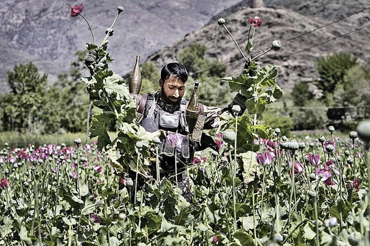 Плантации опийного мака - главный источник средств афганских боевиков. Фото: AP Photo