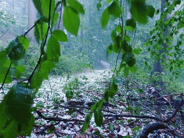 Внимание! Объявлена команда: УРАГАН! МЧС предупреждает о неблагоприятном прогнозе погоды: об ожидаемом усилении ветра, дожде, грозе и граде в пятницу 30 июня. Все мероприятия на природных территориях сегодня отменяются! Оставаться в парке ОПАСНО! При возникновении чрезвычайных ситуаций необходимо звонить по телефонам 101 или 112. Берегите себя и своих близких!#измайловокосинский #природатут#измайлово#косино#срочно#мосприродавао#вао#ураган#шторм#опасность#москва