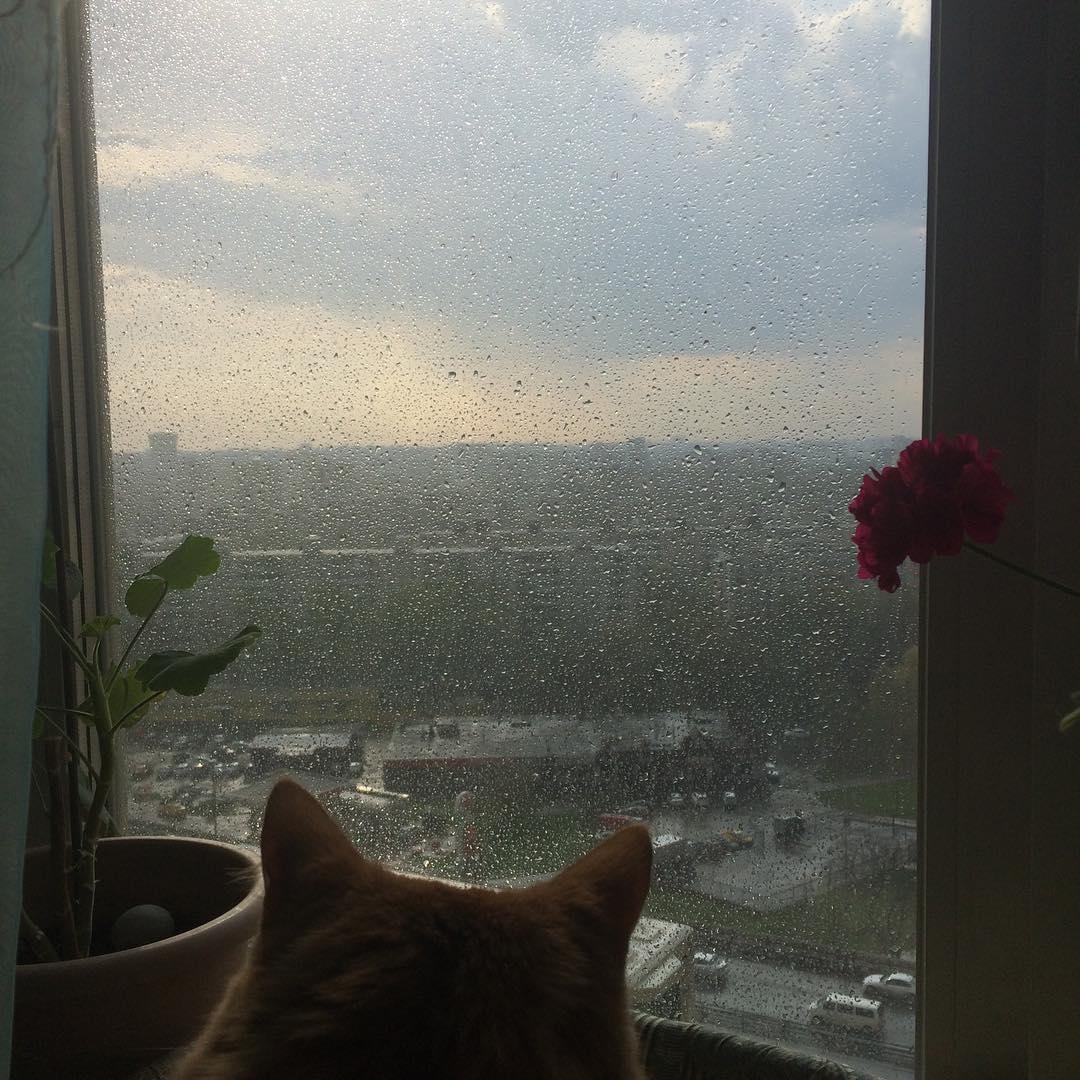 Кот в дозоре #котики #котэ #кот #погода#дождь #окно #вид#фотосессия #фотография