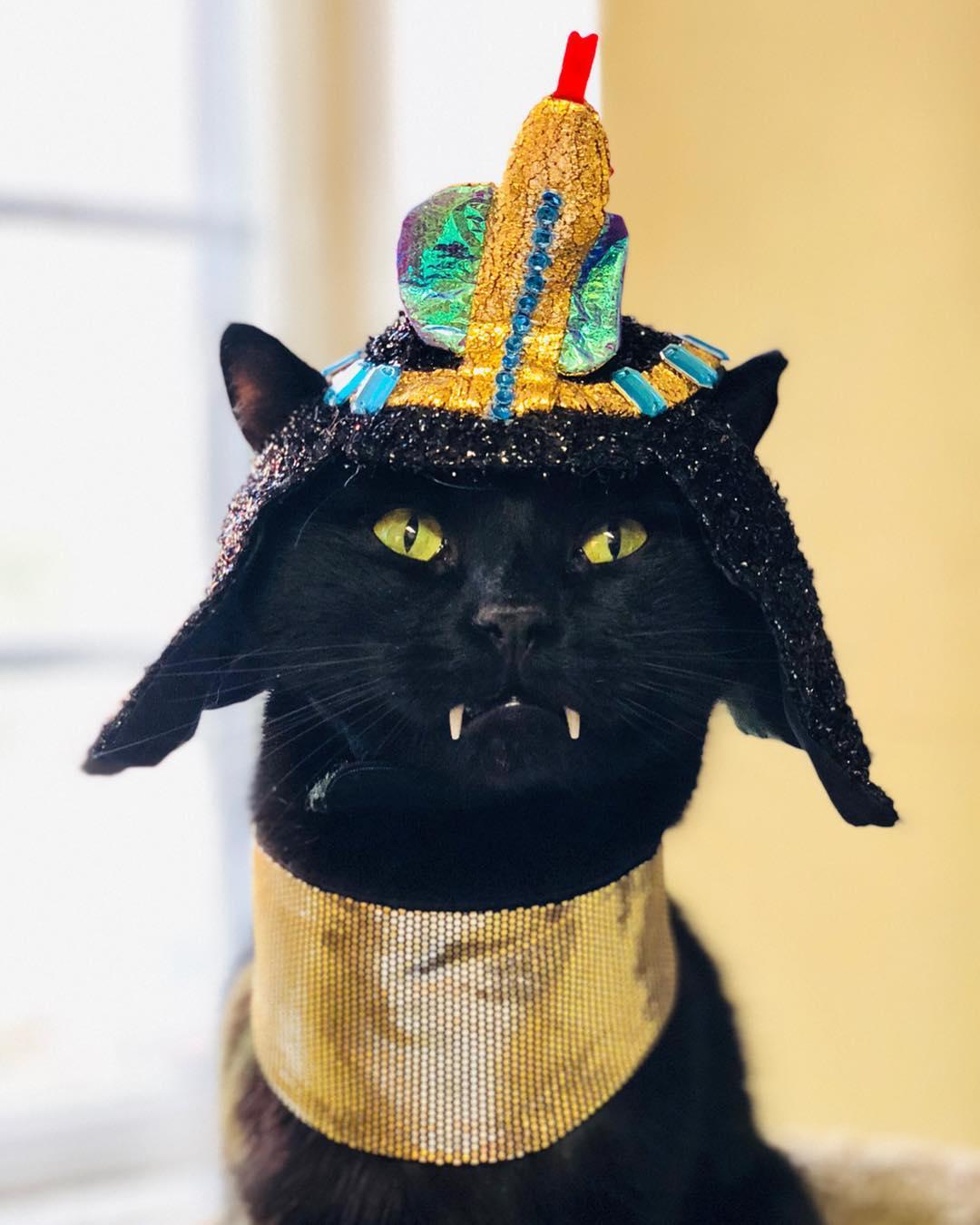 Дракулой котик стал из-за необычных клыков
