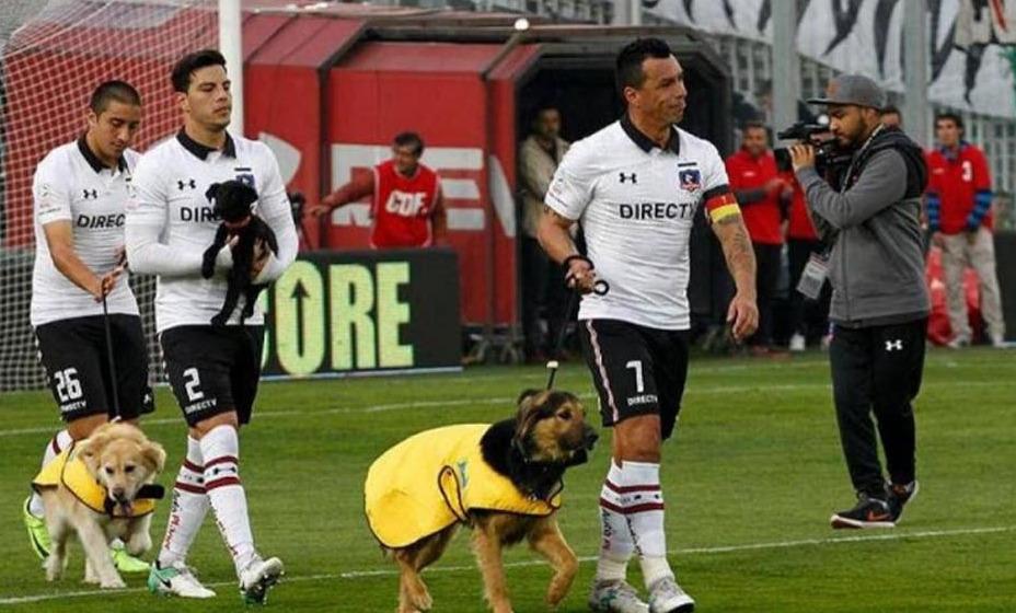 Футболисты чемпионата Румынии будут выходить на игры с бездомными собаками, чтобы найти им кров. На фотографии игроки чилийского клуба «Коло-Коло». Фото:  Telegram